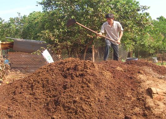 Người trồng đậu xanh đang chuẩn bị phân hữu cơ hoai mục.